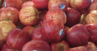 витамины и минералы в яблоках