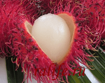 exzoticheskie frukti tailanda