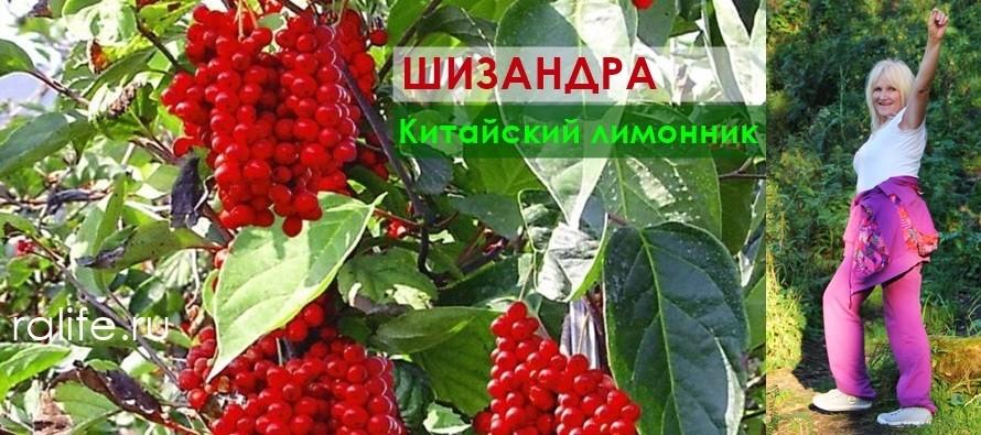 ягоды шизандры и витамины для укрепления иммунитета