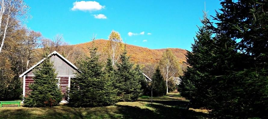 Осень — лучшее время для прогулок в лесу